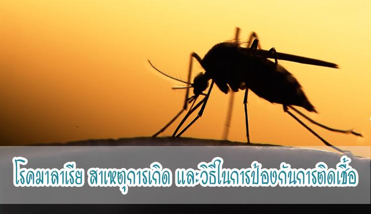 โรคมาลาเรีย