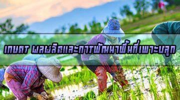เกษตร ผลผลิตและการพัฒนาพื้นที่เพาะปลูก
